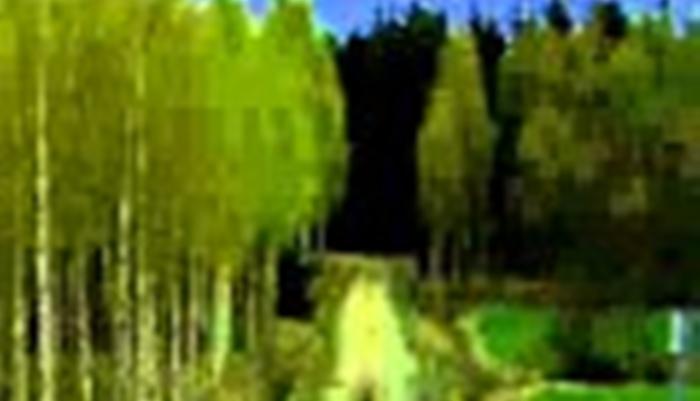Beginilah pnampakan kode 626544984949854984858948l1 (Foto: Youtube com)