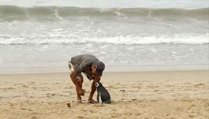 Lihat betapa akrabnya de Souza dan Dindim (Foto Boredpanda com)